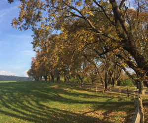 pasture with fall foliage